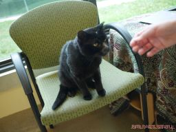 Meet Bob at the Monmouth County SPCA 1