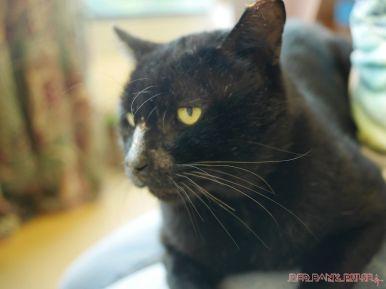 Meet Bob at the Monmouth County SPCA 11