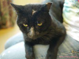 Meet Bob at the Monmouth County SPCA 14
