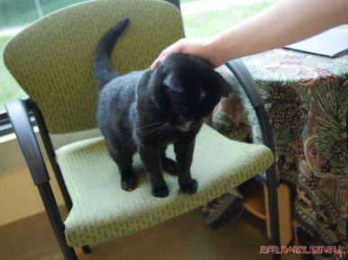 Meet Bob at the Monmouth County SPCA 2