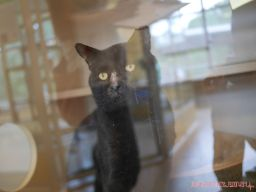 Meet Bob at the Monmouth County SPCA 3