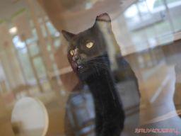 Meet Bob at the Monmouth County SPCA 4