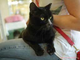 Meet Bob at the Monmouth County SPCA 7