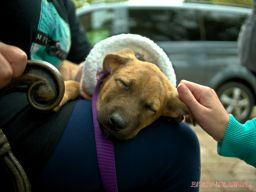coffee-corral-pet-adoption-12