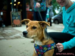 coffee-corral-pet-adoption-3