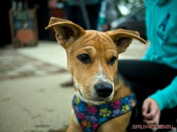 coffee-corral-pet-adoption-4