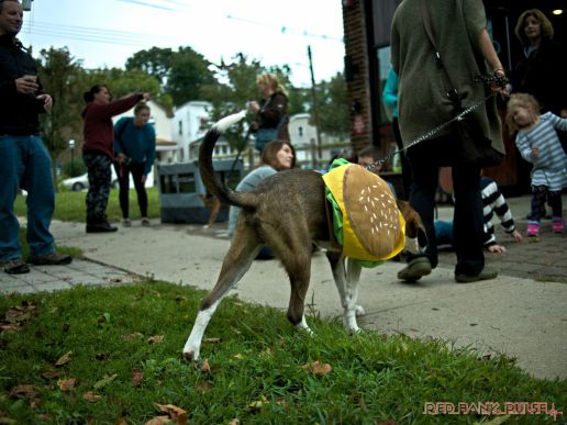 coffee-corral-pet-adoption-7