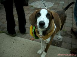 coffee-corral-pet-adoption-8