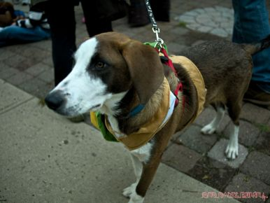 coffee-corral-pet-adoption-9