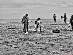 Clean Ocean Action Beach Sweeps 2 1 of 20