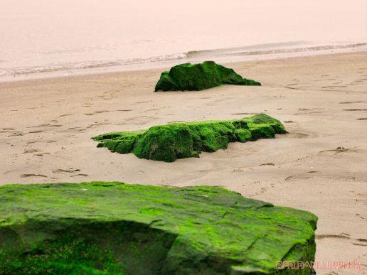Clean Ocean Action Beach Sweeps 2 13 of 20