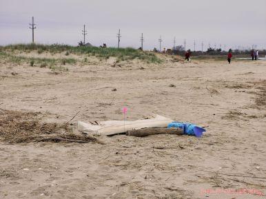 Clean Ocean Action Beach Sweeps 2 16 of 20
