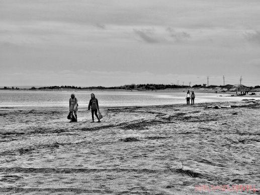Clean Ocean Action Beach Sweeps 2 17 of 20