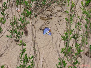 Clean Ocean Action Beach Sweeps 2 3 of 20