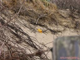 Clean Ocean Action Beach Sweeps 2 7 of 20