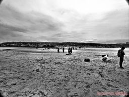 Clean Ocean Action Beach Sweeps 60 of 64