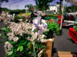 Red Bank Farmers Market 9 of 13