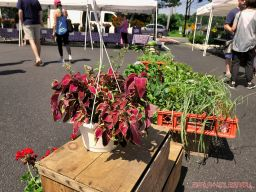 Red Bank Farmer's Market 5 of 48
