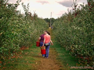Battleview Orchards 33 of 52