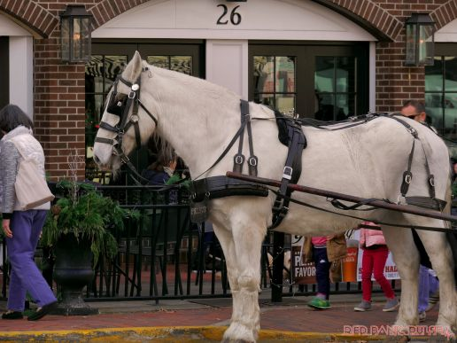 Red Bank Holiday Decorations Horse Rides 16 of 33