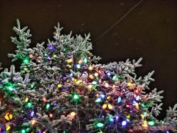 Red Bank Holiday Lights Night Snow 1 of 17