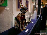 Catsbury Park Cat Convention 45 of 65
