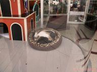 Catsbury Park Cat Convention 64 of 65