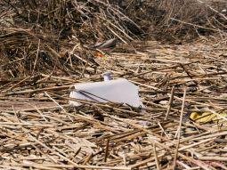Clean Ocean Action Beach Sweeps 2018 46 of 64