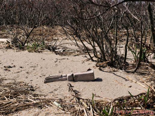 Clean Ocean Action Beach Sweeps 2018 49 of 64