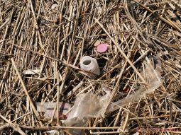 Clean Ocean Action Beach Sweeps 2018 54 of 64