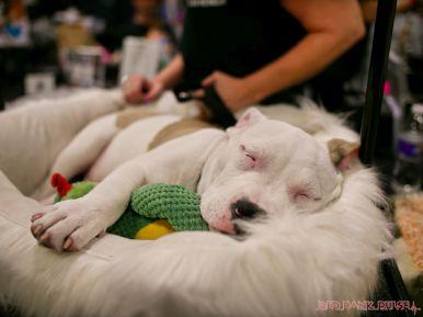 Super Pet Expo April 2018 109 of 117