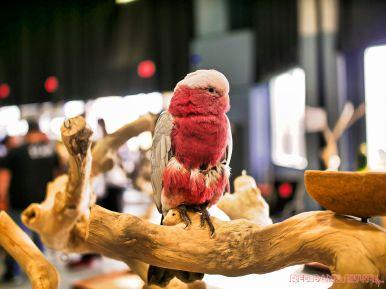 Super Pet Expo April 2018 3 of 117