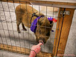 Super Pet Expo April 2018 32 of 117