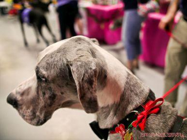 Super Pet Expo April 2018 46 of 117