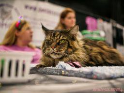 Super Pet Expo April 2018 77 of 117