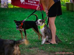 Red Bank Dog Days August 2018 18 of 51