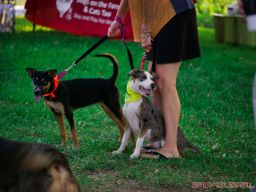 Red Bank Dog Days August 2018 19 of 51