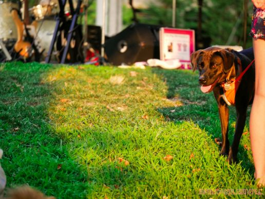 Red Bank Dog Days August 2018 2 of 51