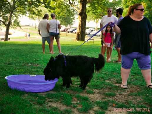 Red Bank Dog Days August 2018 20 of 51