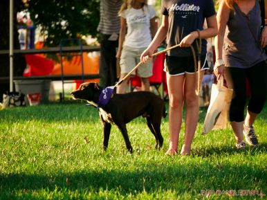 Red Bank Dog Days August 2018 27 of 51