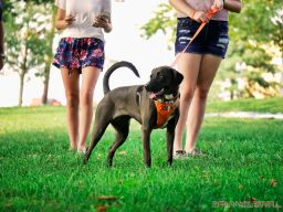 Red Bank Dog Days August 2018 37 of 51