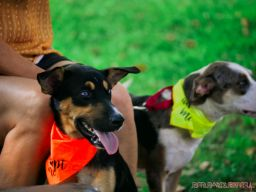 Red Bank Dog Days August 2018 40 of 51