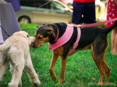 Red Bank Dog Days August 2018 47 of 51
