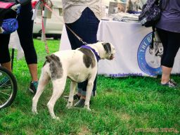 Red Bank Dog Days August 2018 49 of 51