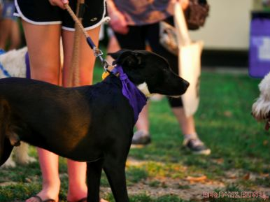 Red Bank Dog Days August 2018 6 of 51