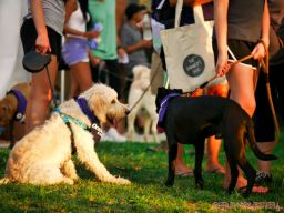 Red Bank Dog Days August 2018 9 of 51