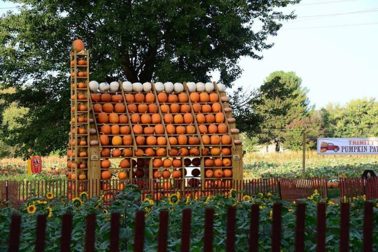 Pumpkin Festival At Happy Day Farm
