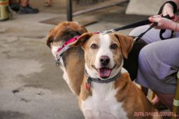 Strut Your Mutt 2018 with The Brodie Fund at The Boondocks Fishery 11 of 58