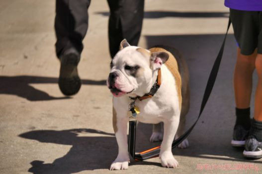 Strut Your Mutt 2018 with The Brodie Fund at The Boondocks Fishery 13 of 58