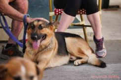 Strut Your Mutt 2018 with The Brodie Fund at The Boondocks Fishery 15 of 58